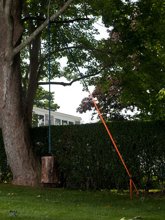 Virginia Overton, Untitled (Tree with Log #2) , 2012, log, two ratchet straps, dimensions variable