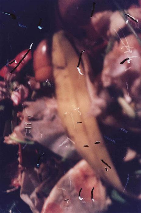 Ryan Foerster, food bomb - compost , 2011, C-print,10 x 8 in, Edition 1/3 + II AP
