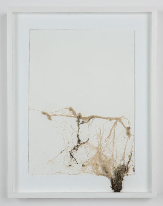 Josh Tonsfeldt, Untitled , 2008,Spray paint on spider's web on paper, 14.4 x 18.4 in