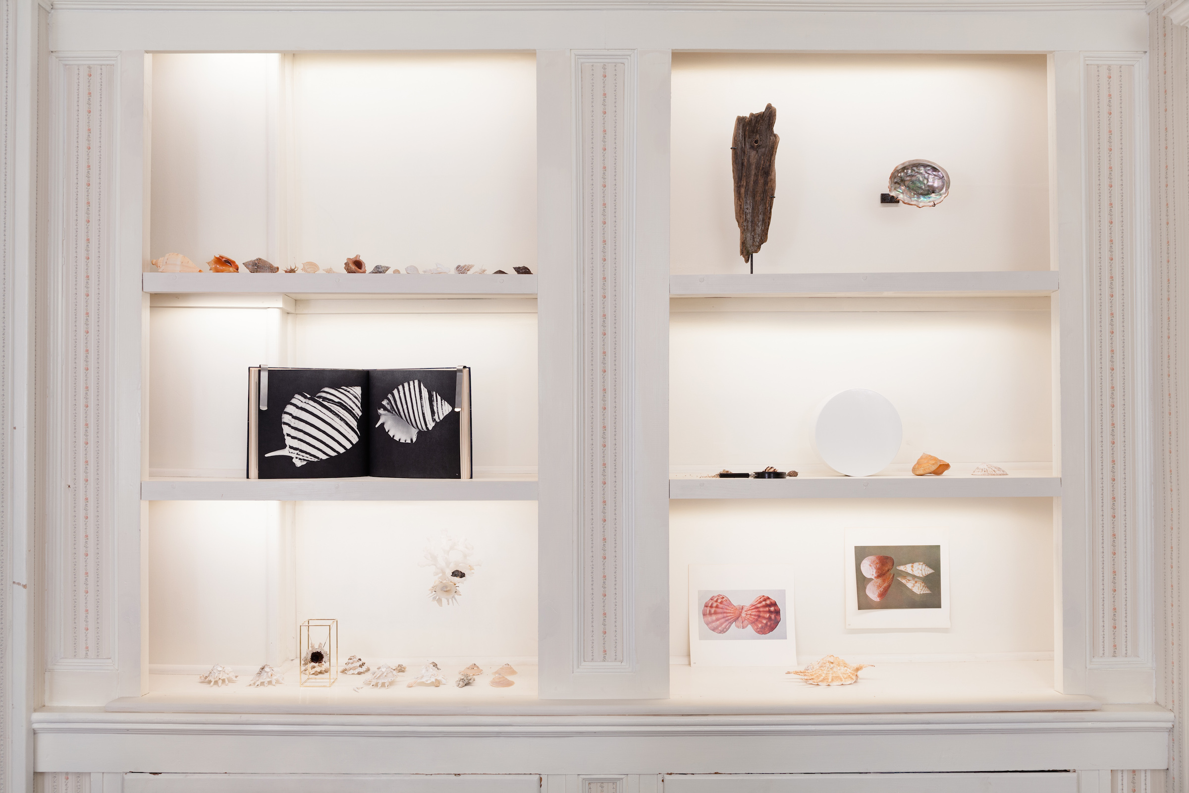 Carol Bove and Barry Rosen,    Untitled arrangement   , 2014, assorted seashells collected by Barry Rosen and Carol Bove, dimensions variable
