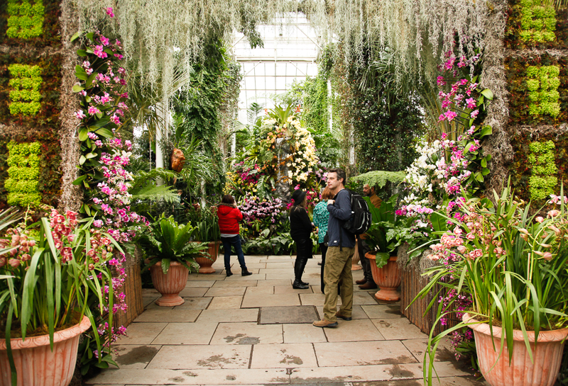 NYBG: 2016 Orchid Show: Orchidelirium