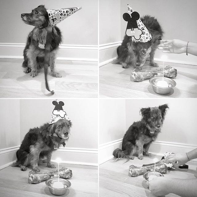 Pancho's 4th Birthday Celebration! 🐾@groana #oldafnow