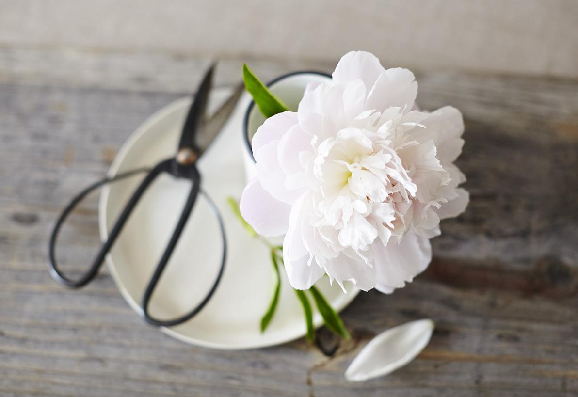 7-3-16_flower1688 1Hero.jpg