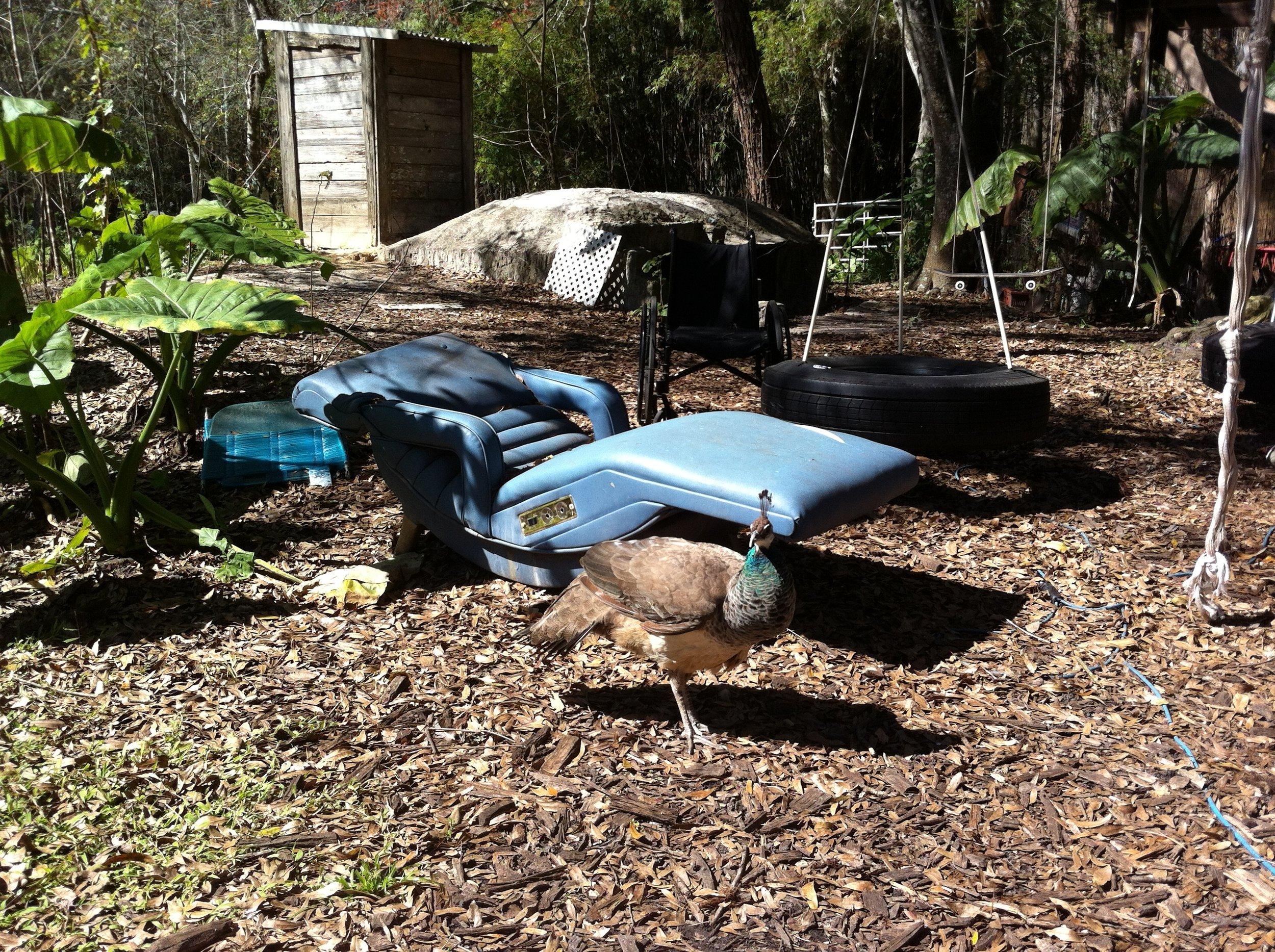 peacock recliner.JPG