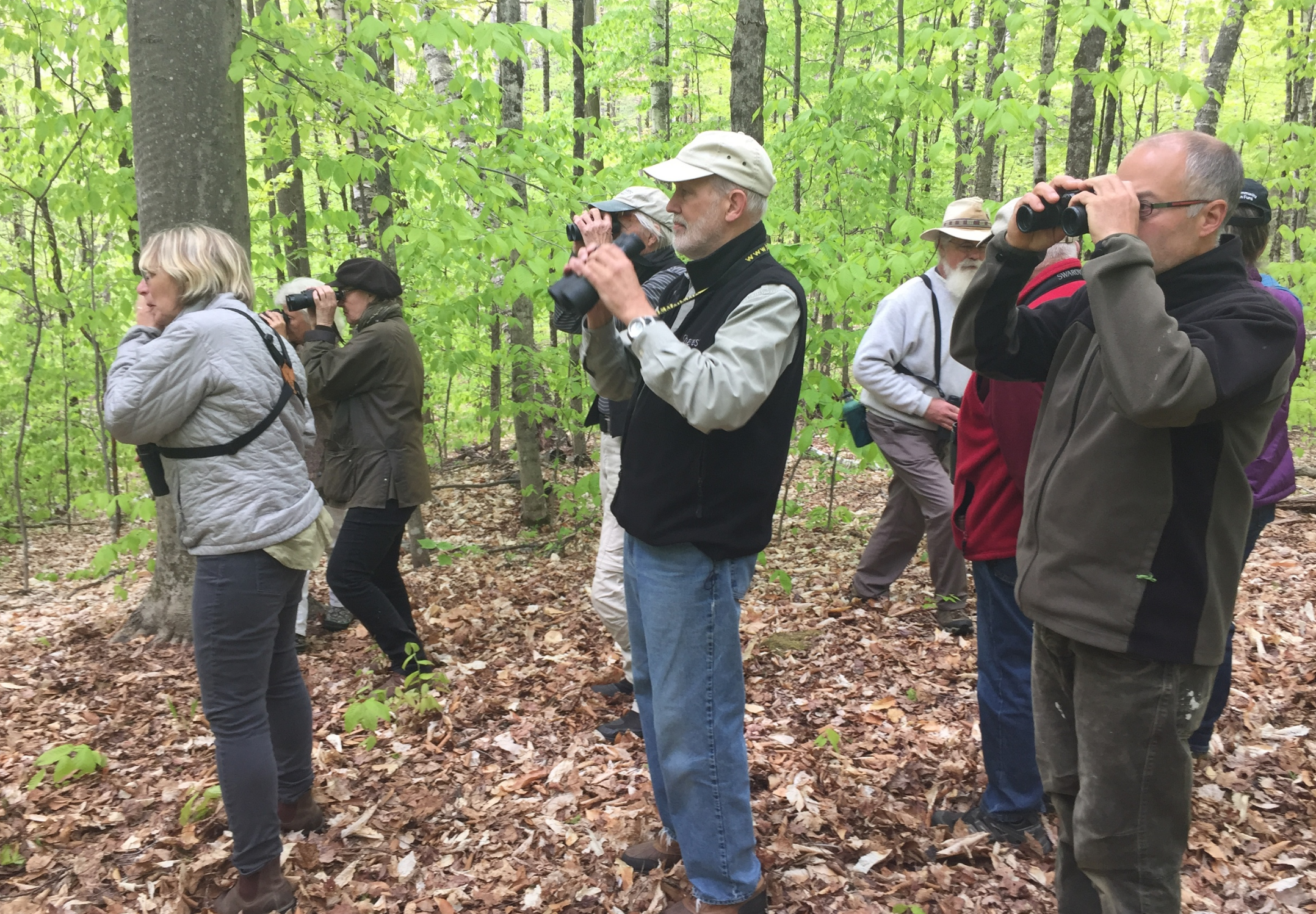 guided-bird-walk-bob-engel-nature-museum-grafton