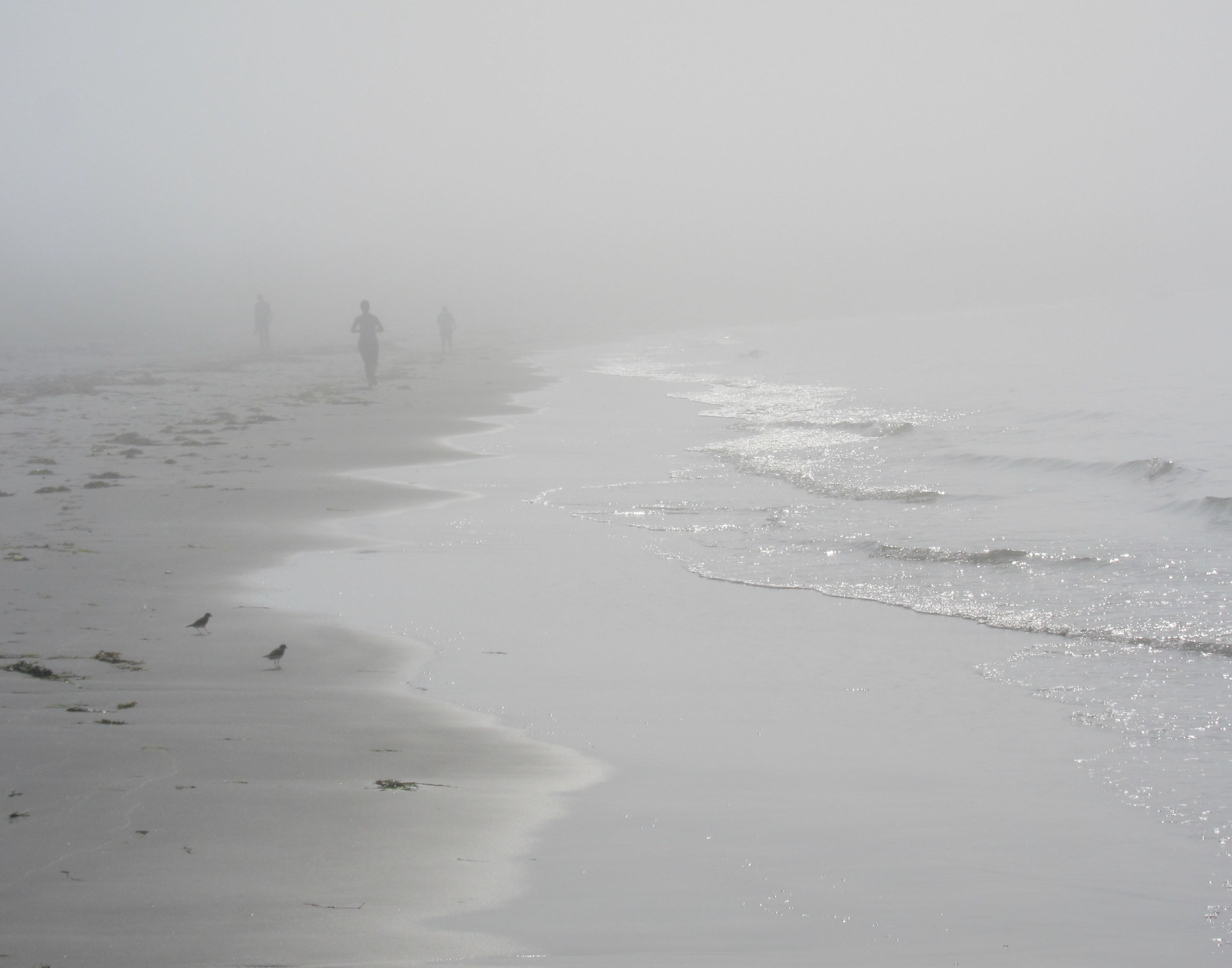 """Morning Run"", photography, 20"" x 16"", $300"