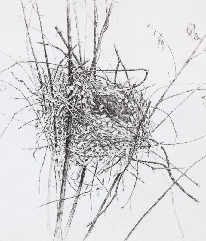 """'Nest', 18""""x15"""", $190 framed, $130 unframed"""