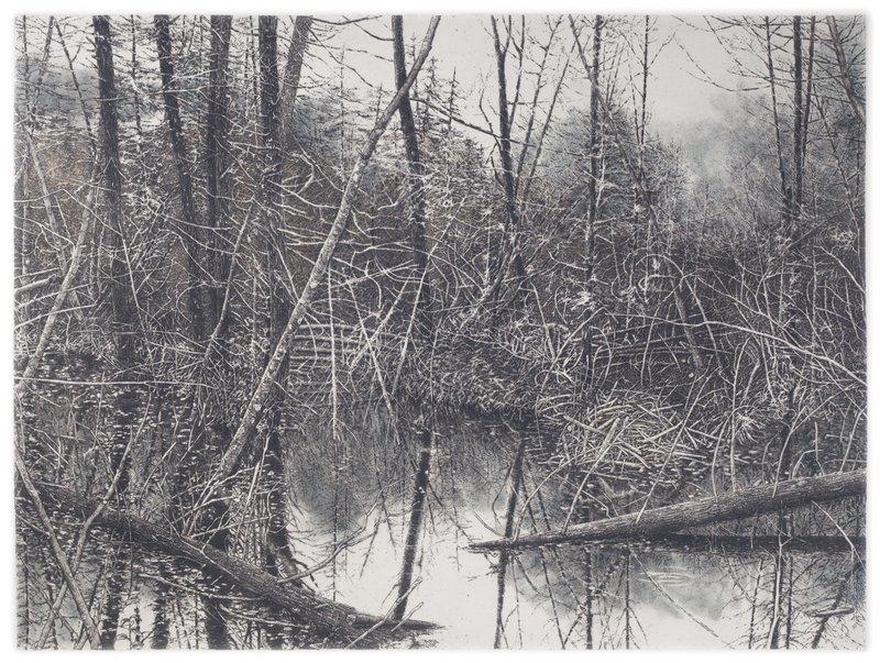 "'North Country Cedar Swamp', 32""x27"", $650 framed, $400 unframed"