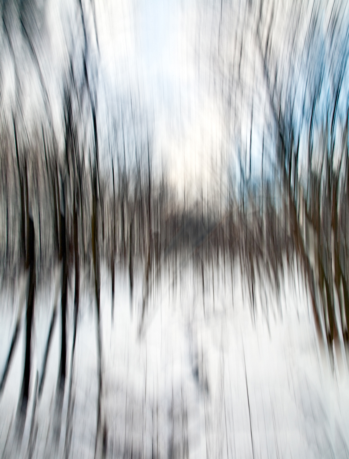 """""""Winter Trees"""", photography, price dependent on size etc"""