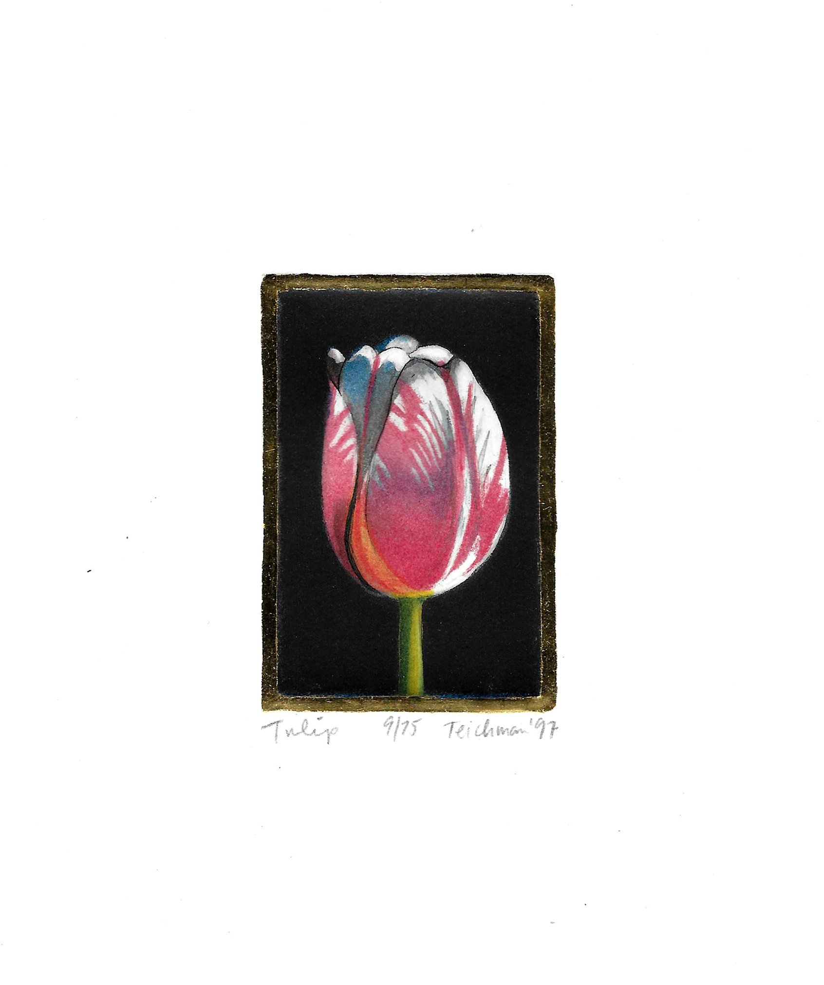 """Tulip"",  multi-plate etching, $100 (unframed)"