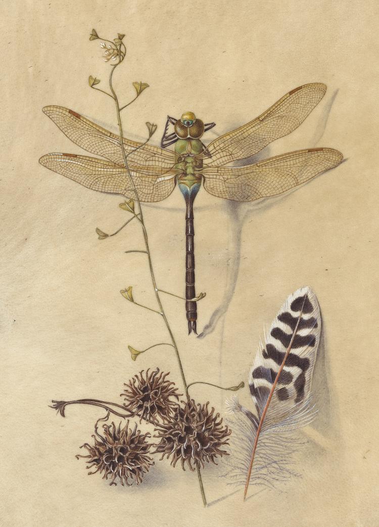 dragonfly_klahne.jpg