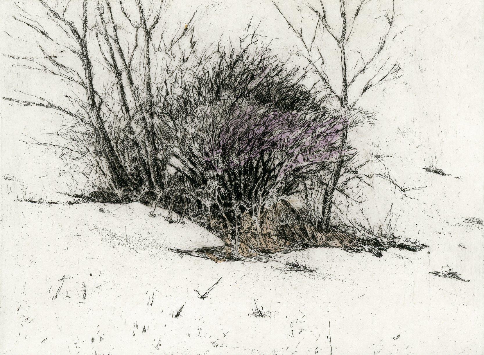 """'Winter Blueberry Bush', 12""""x11"""", $140 framed, $75 unframed"""