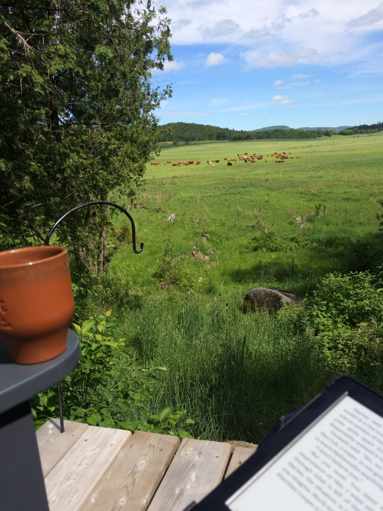Our morning coffee view