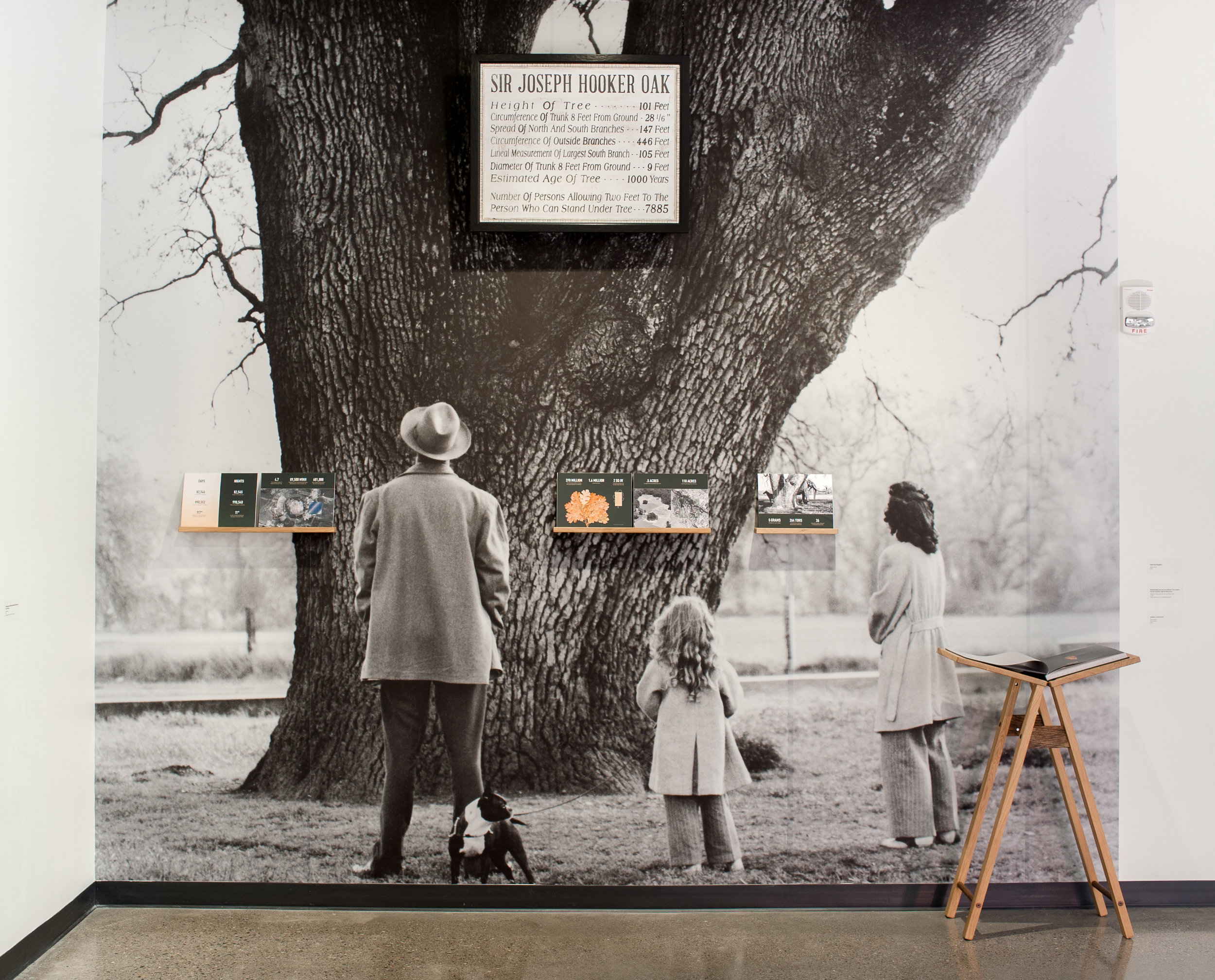 Recreation of Hooker Oak Sign and tree printed at scale.