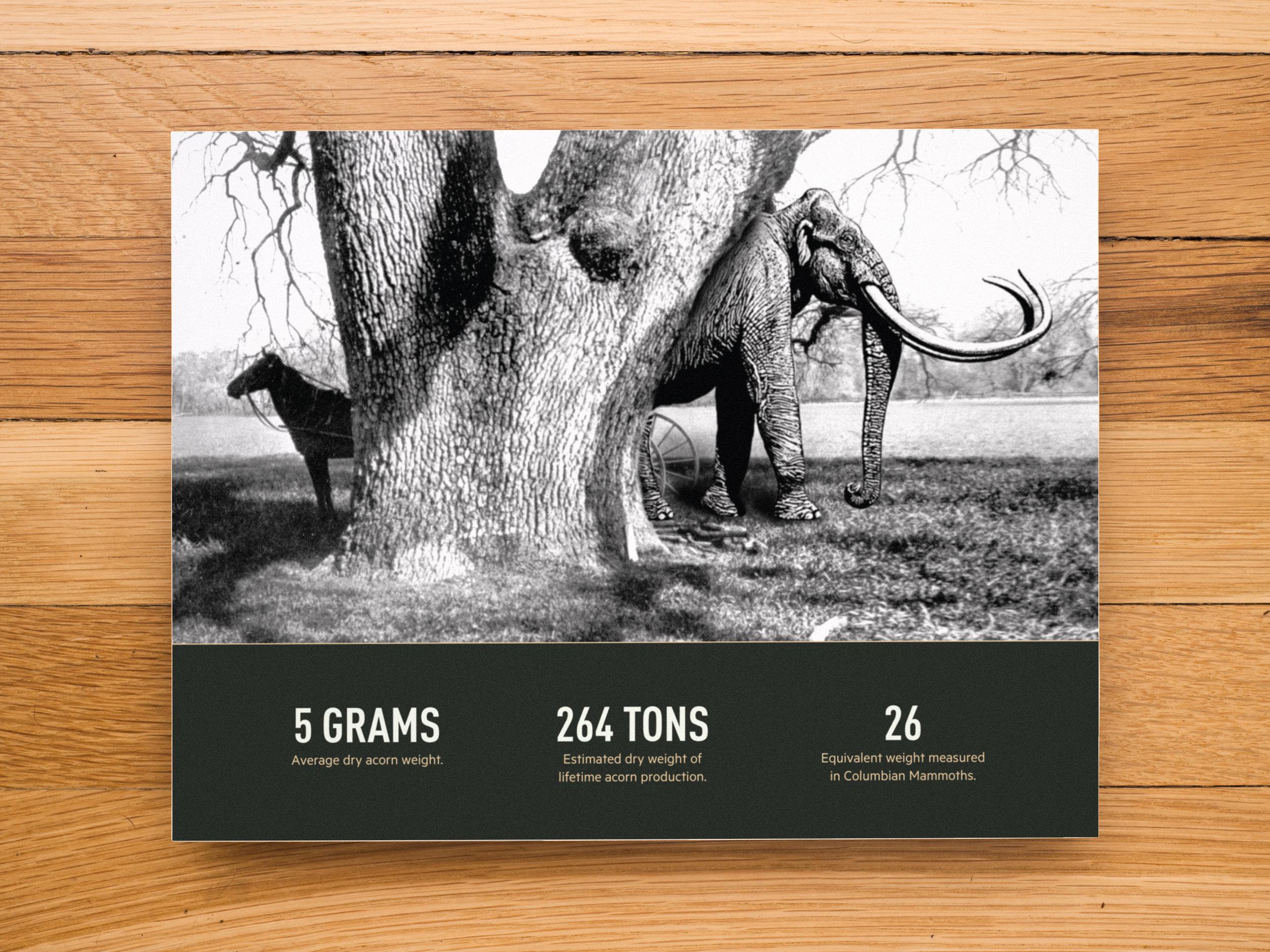 Vanished_Portfolio_Infographics_5.jpg