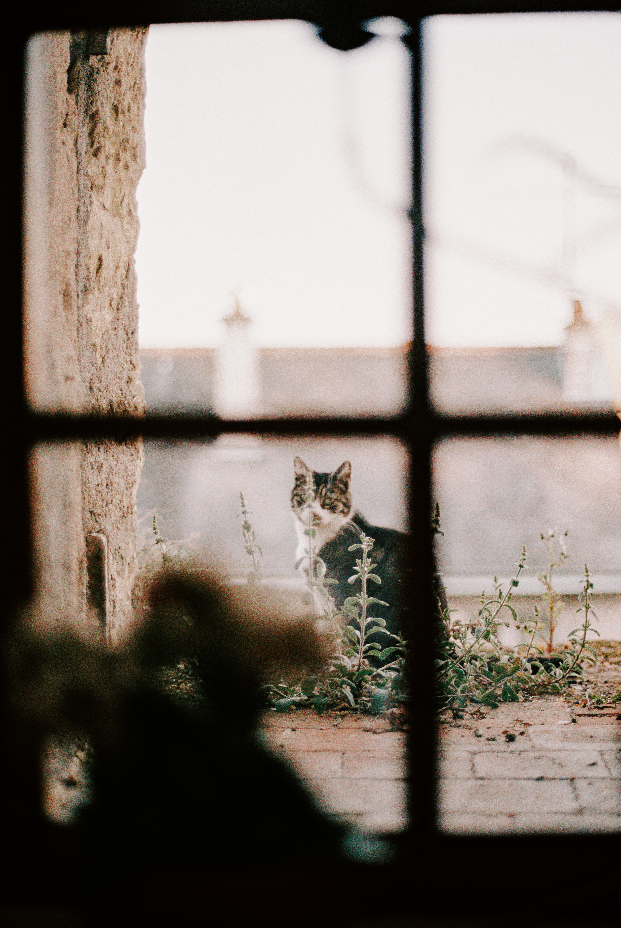 SO MANY FRENCH CATS. I was so hoping to see Parisian cats and when that didn't happen I got a little bummed. Amboise definitely made up for that deficit though in the BEST possible way.