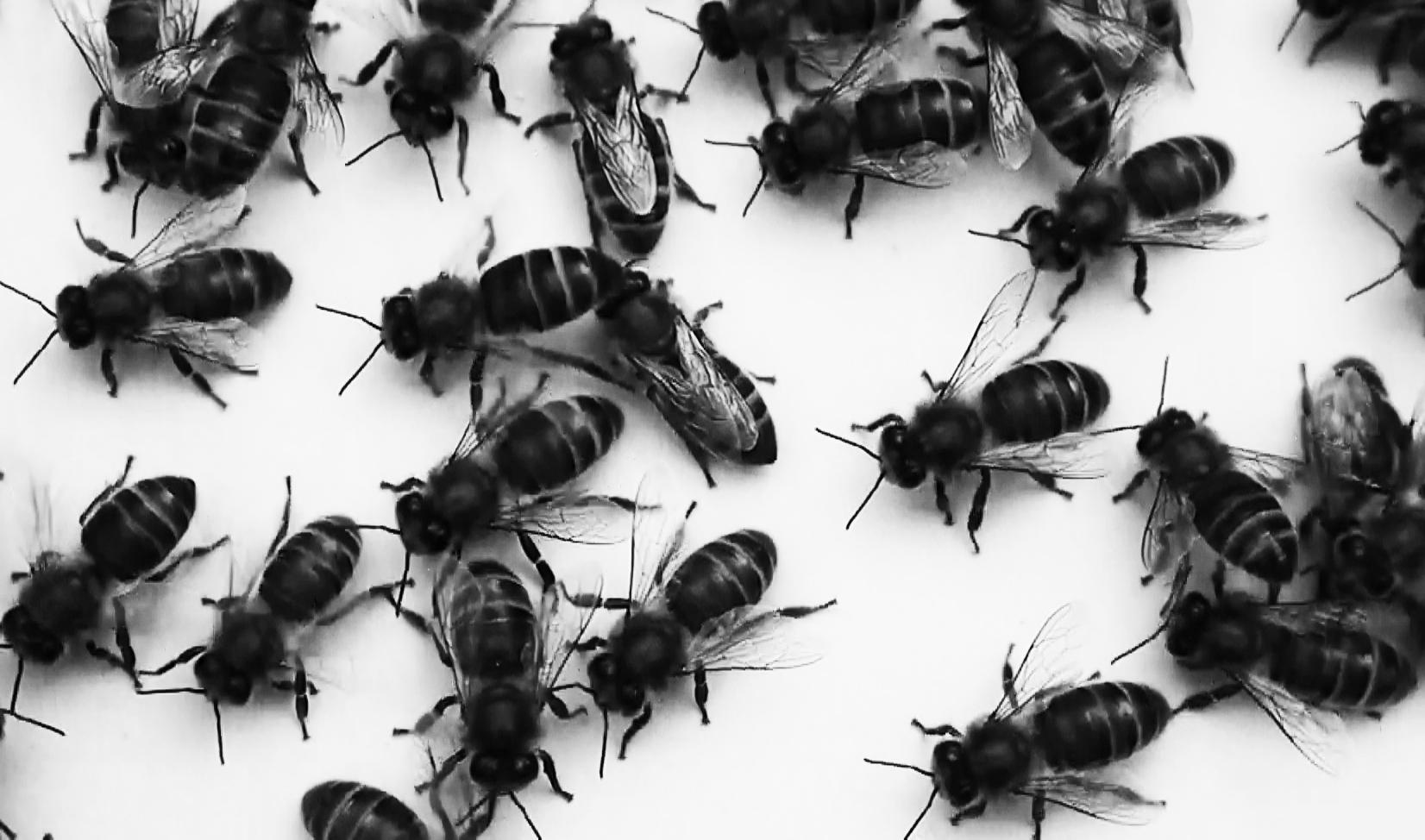 Bee Still2.jpg