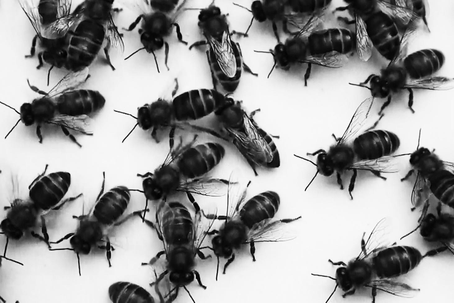 Bee Still2 cropped for website.jpg