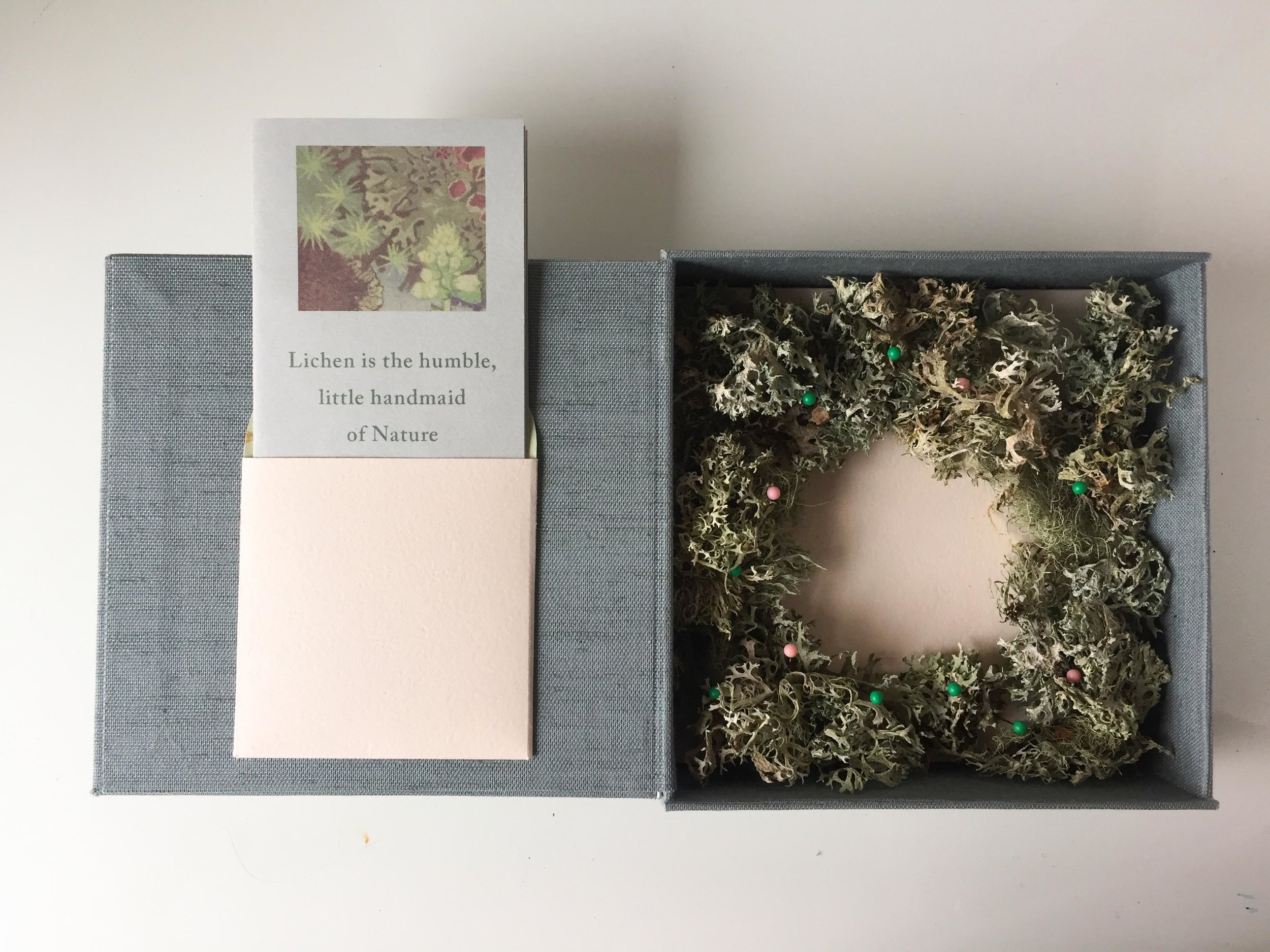 The Lichen Collector cigar box