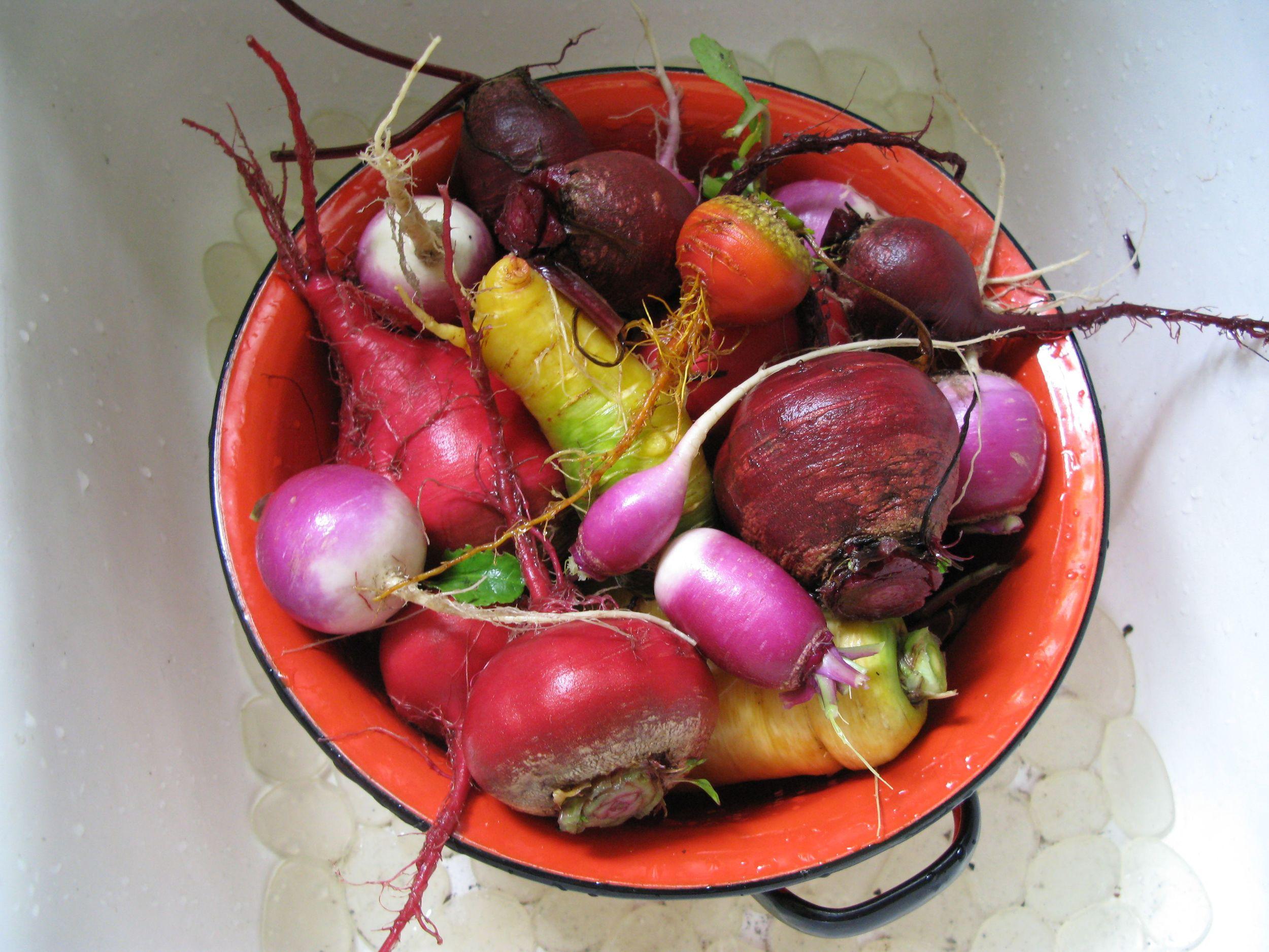 turnips in collander.jpg