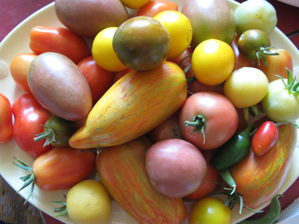colorfultomatoes.JPG