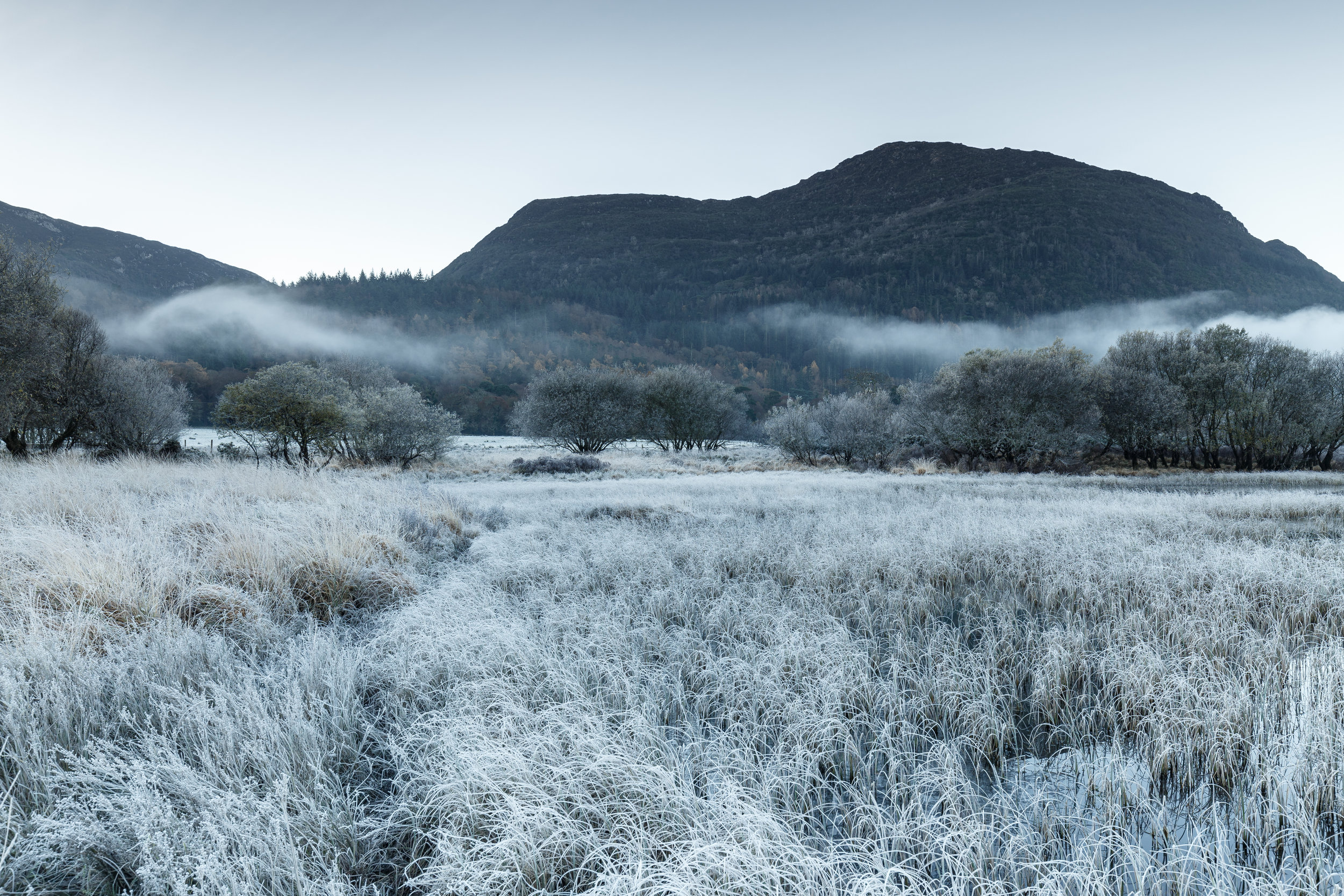 The First Frost of Winter