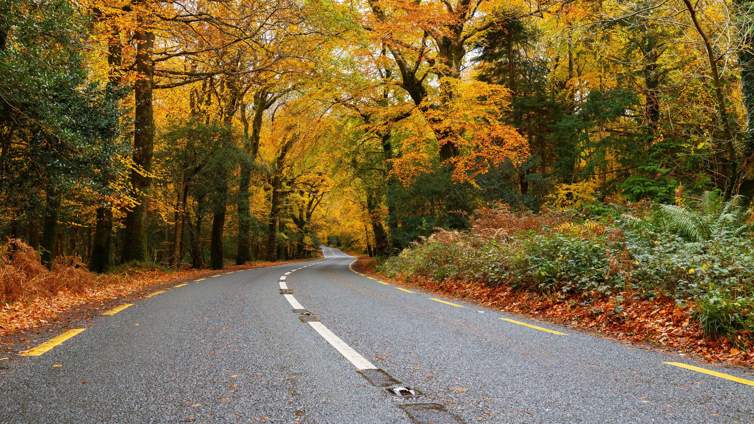 Heading Through Autumn