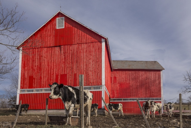 "Photo credit:  Paul  from Chicago "" Milk? Got It""  So this is a departure from the last couple of posts. A friend and I saw this barn from afar. It was SO red that we had to drive over and investigate. Nice country scene I thought. Click click click... "")"