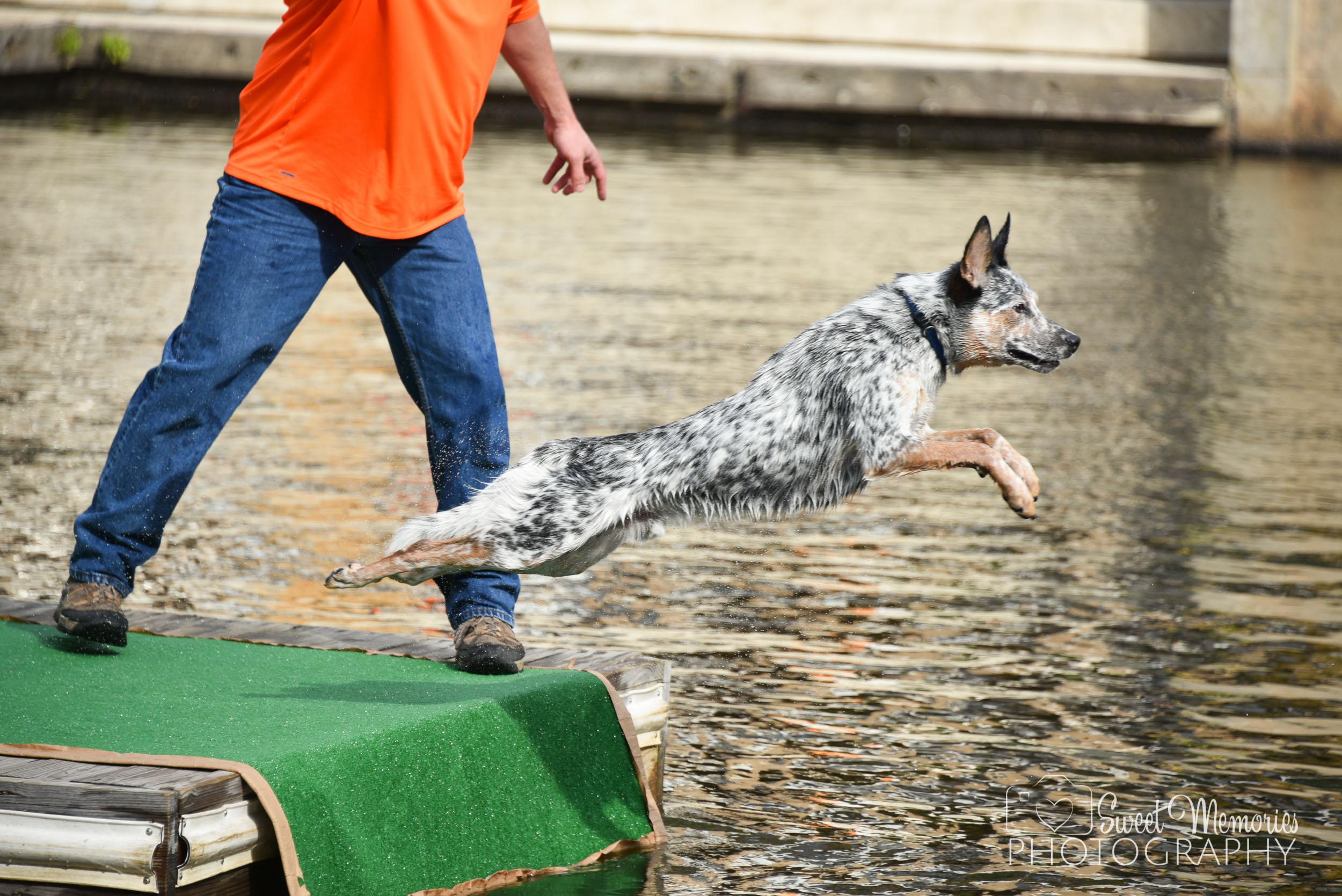 L ake Anne, Reston - Chesapeake Dock Diving Dogs Event