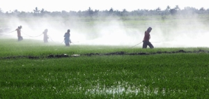 Coming to a beach near you! Swiss-owned Syngenta is spraying the Garden Isle with chemicals banned in its own backyard