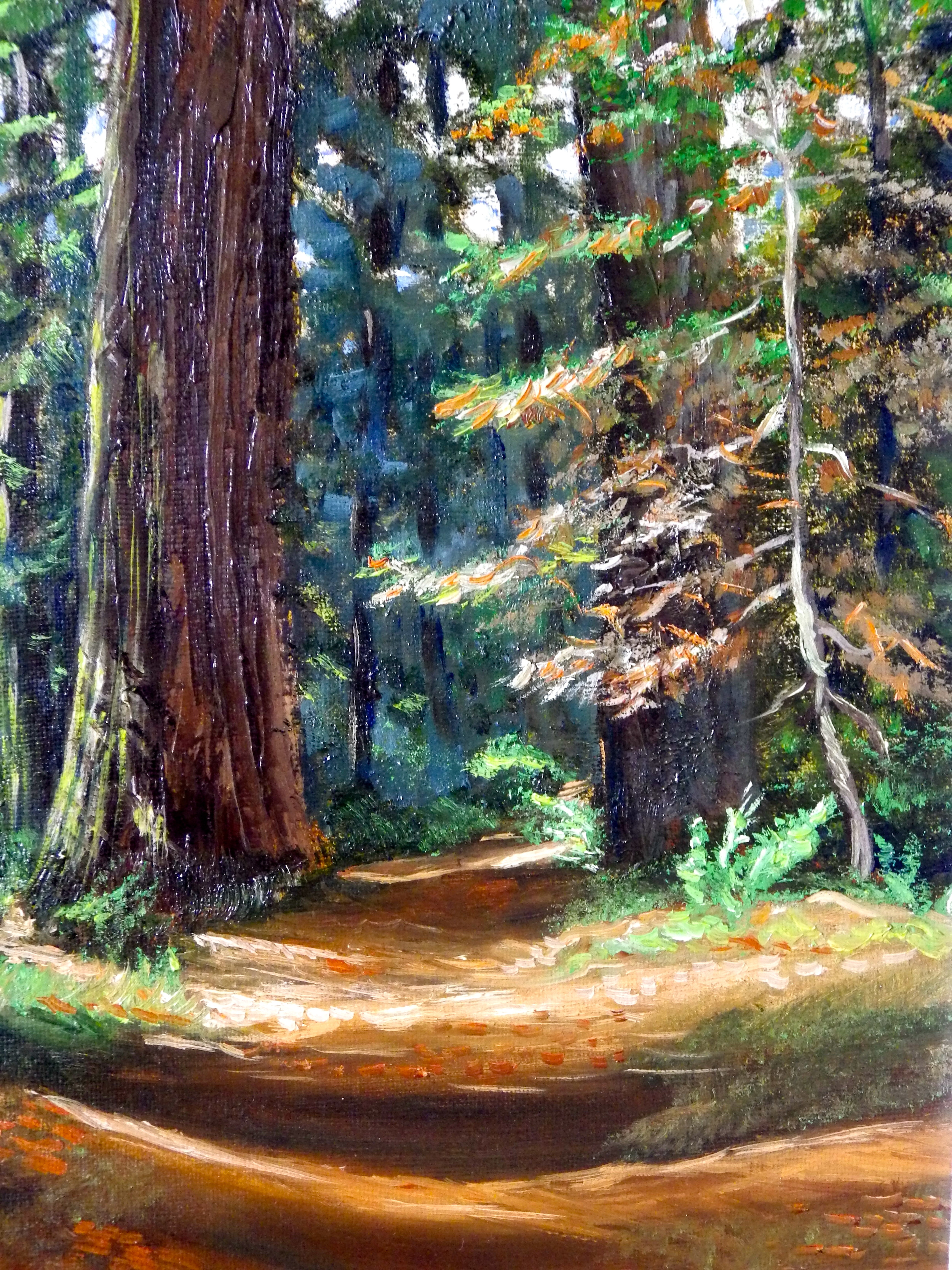 California Redwoods - Private Collection