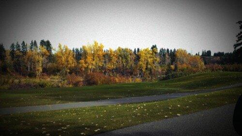 Autumn Scene (1).jpg