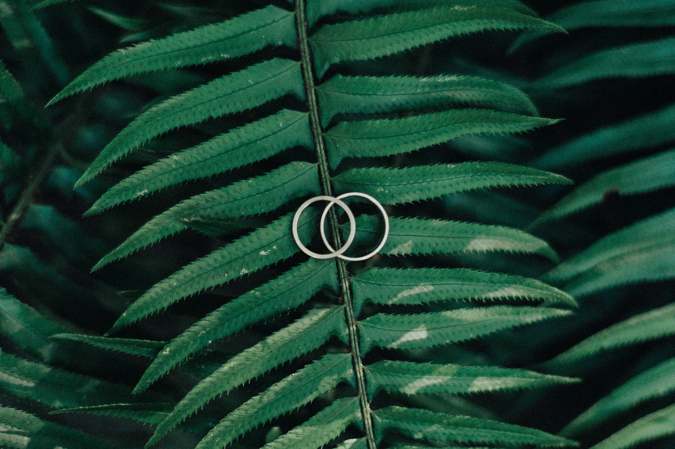 wedding rings sit on top of a green fern