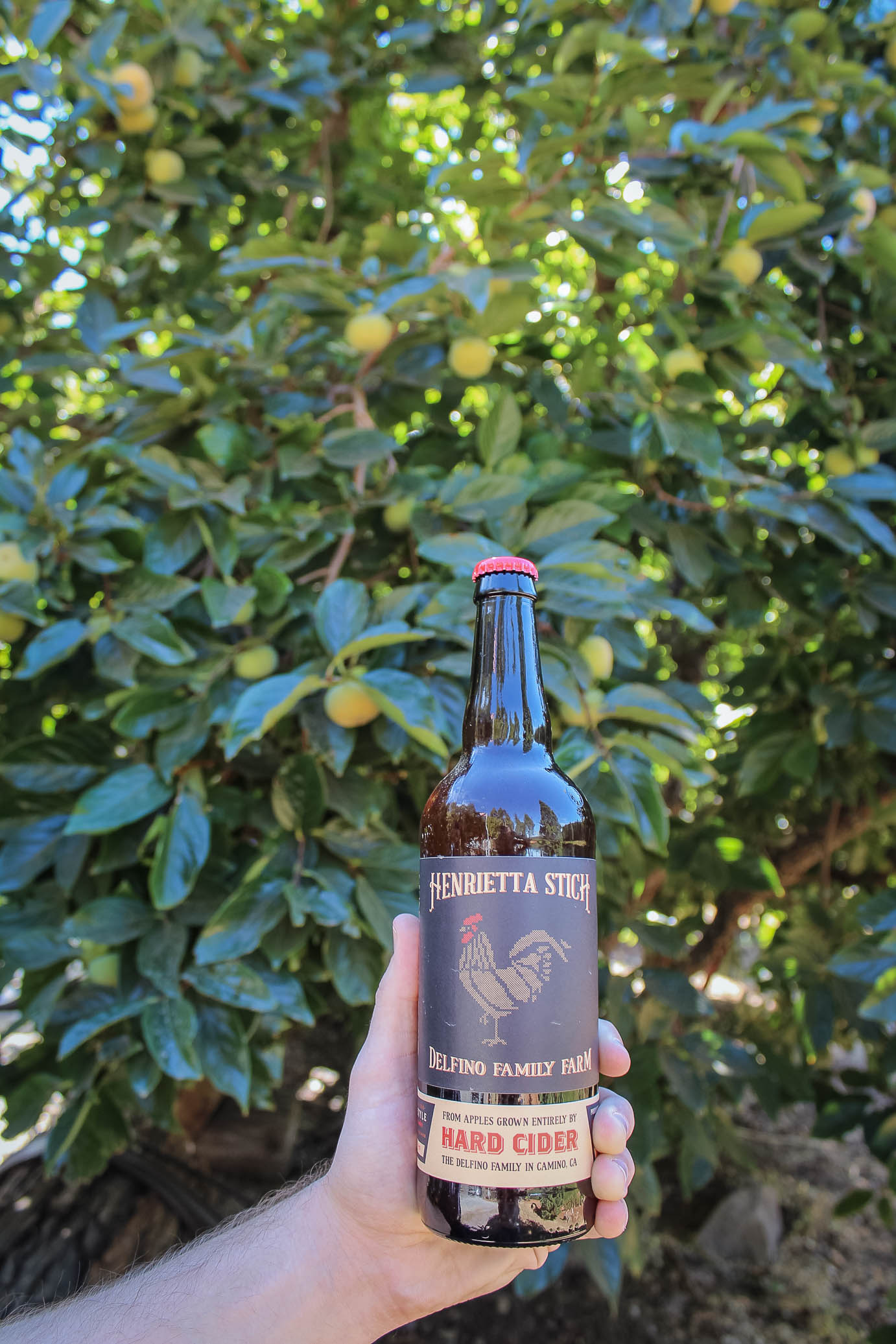Bottle of the second batch of Henrietta Stitch hard apple cider at Kids Inc/Delfino Family Farm in Apple Hill, CA
