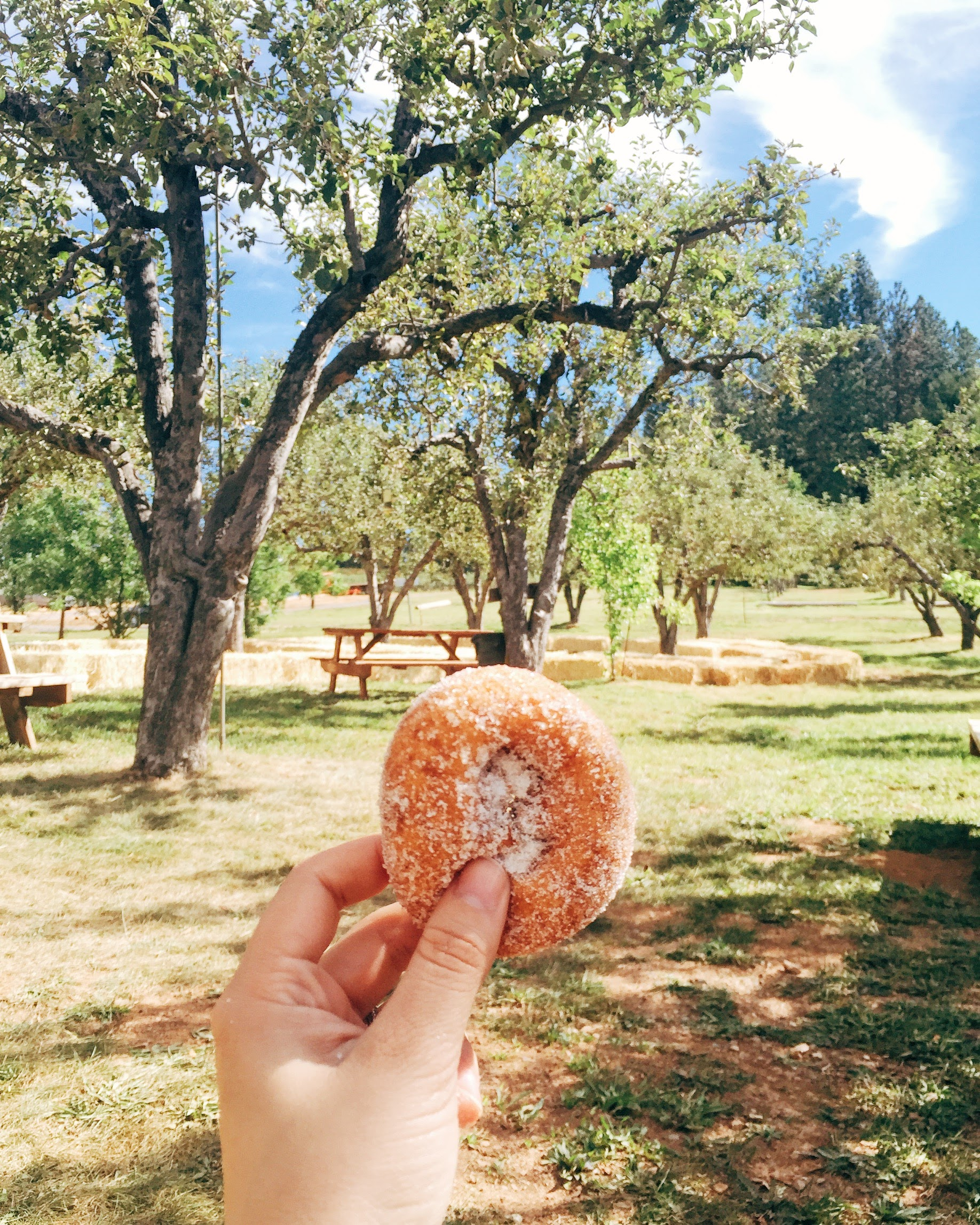 Donut from Rainbow Orchards in Apple Hill, CA