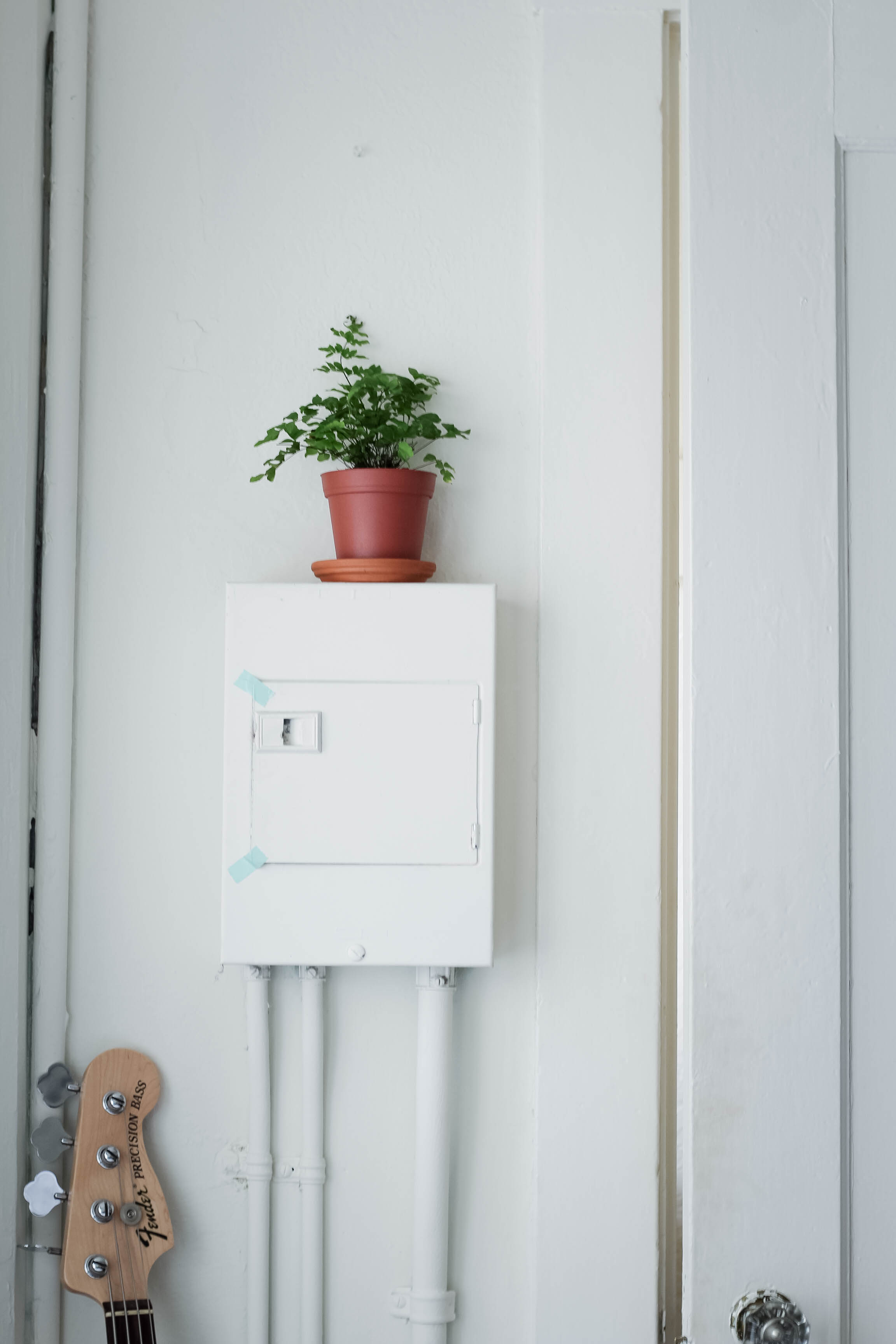 decorating with plants in a studio apartment | tintedgreen