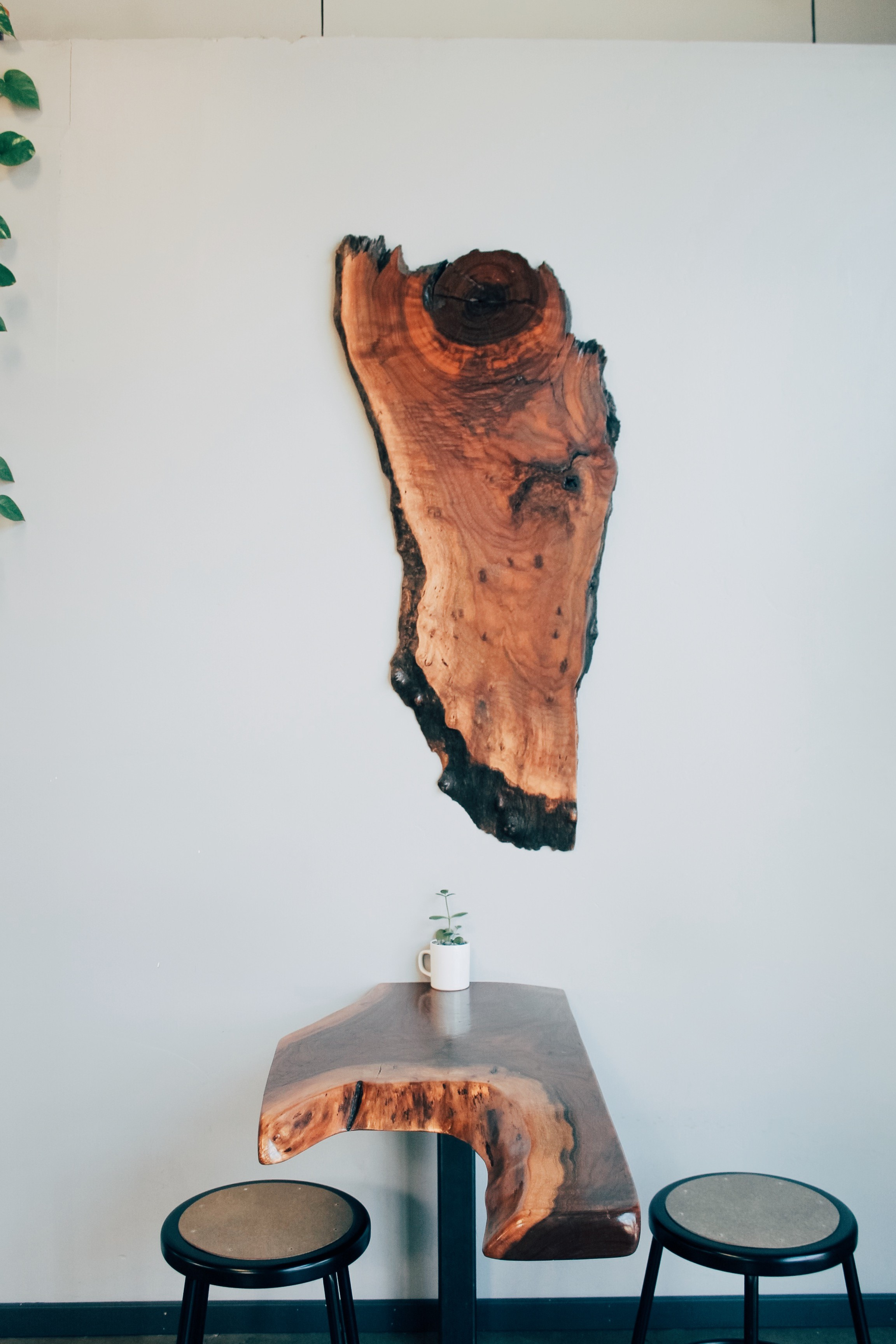 The decor at Identity Coffees in Sacramento, CA is filled with raw edge wood planks. A cool, hipster, specialty coffee shop to visit. | tintedgreen