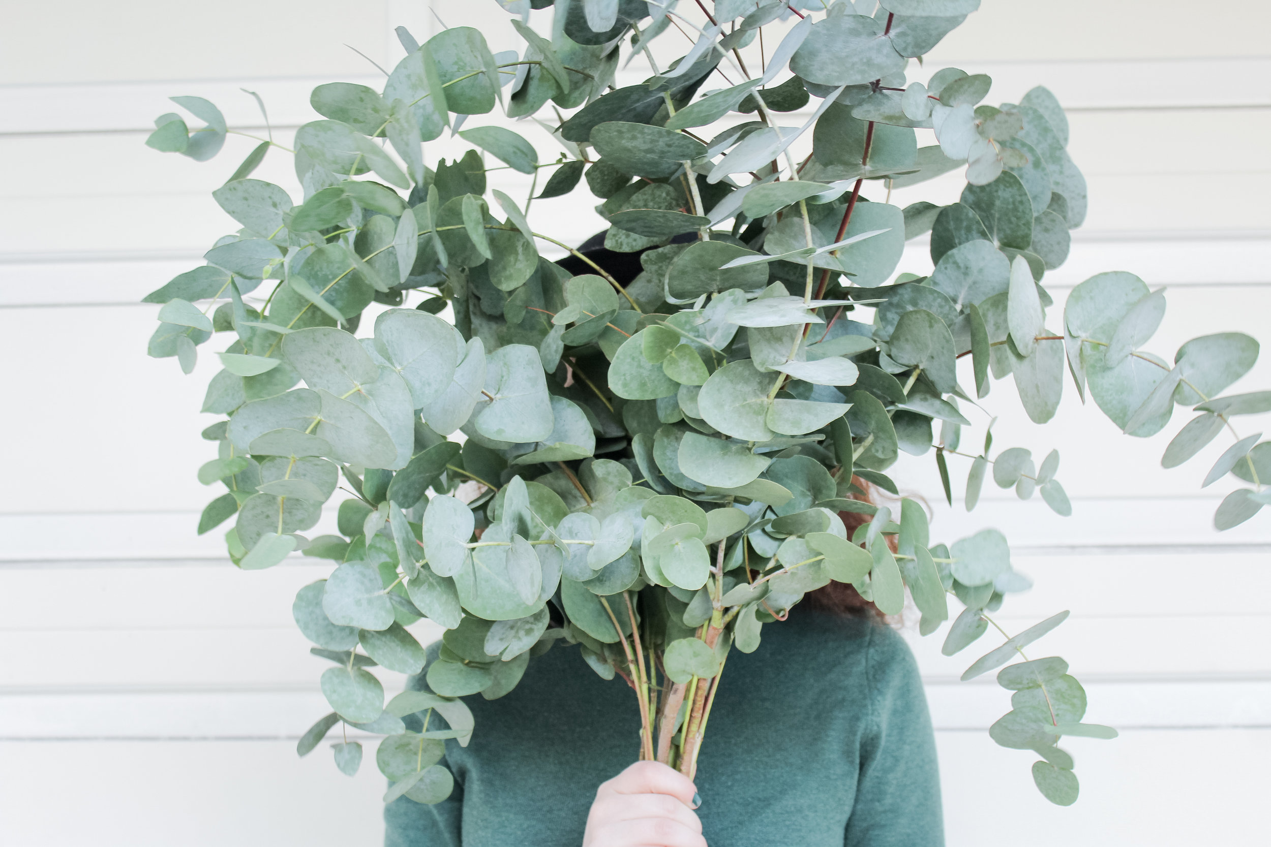 dollar eucalyptus bunch | tintedgreen