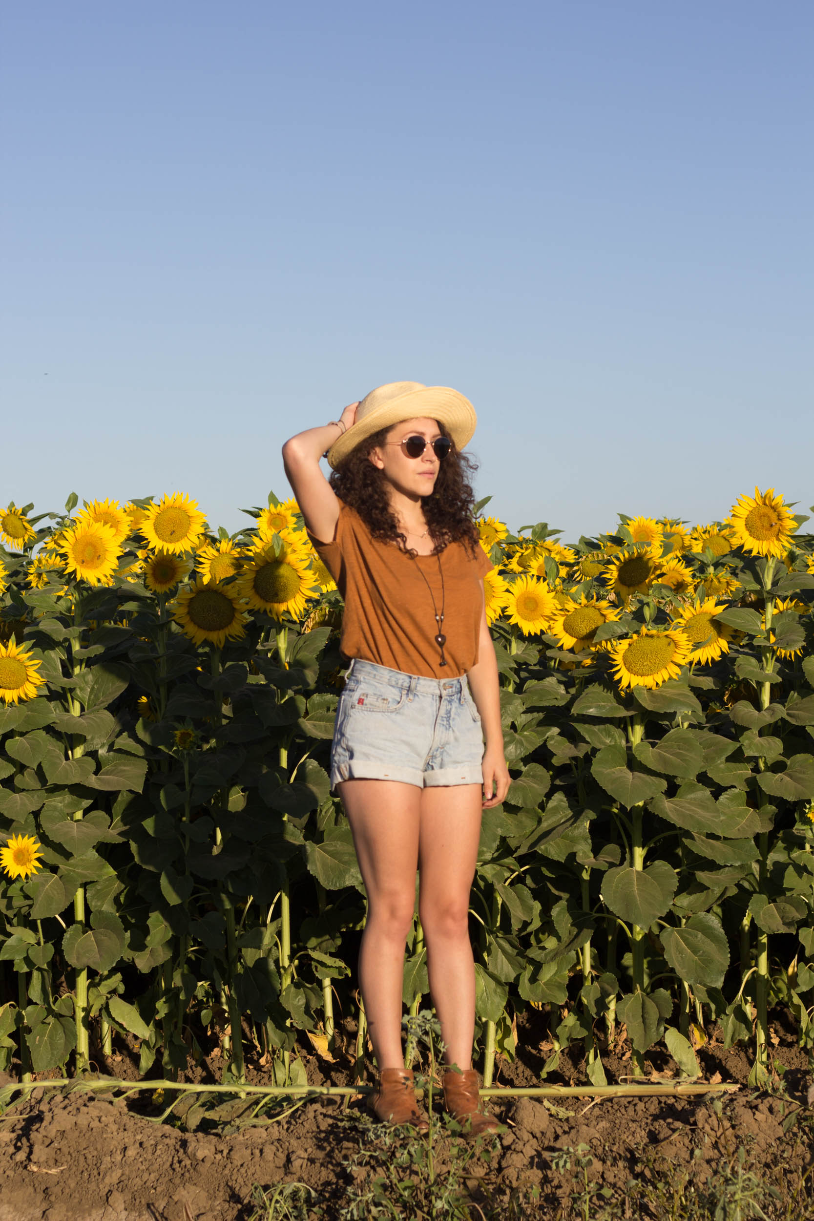 sunflower fields and summer vibes   kelly boylan photography