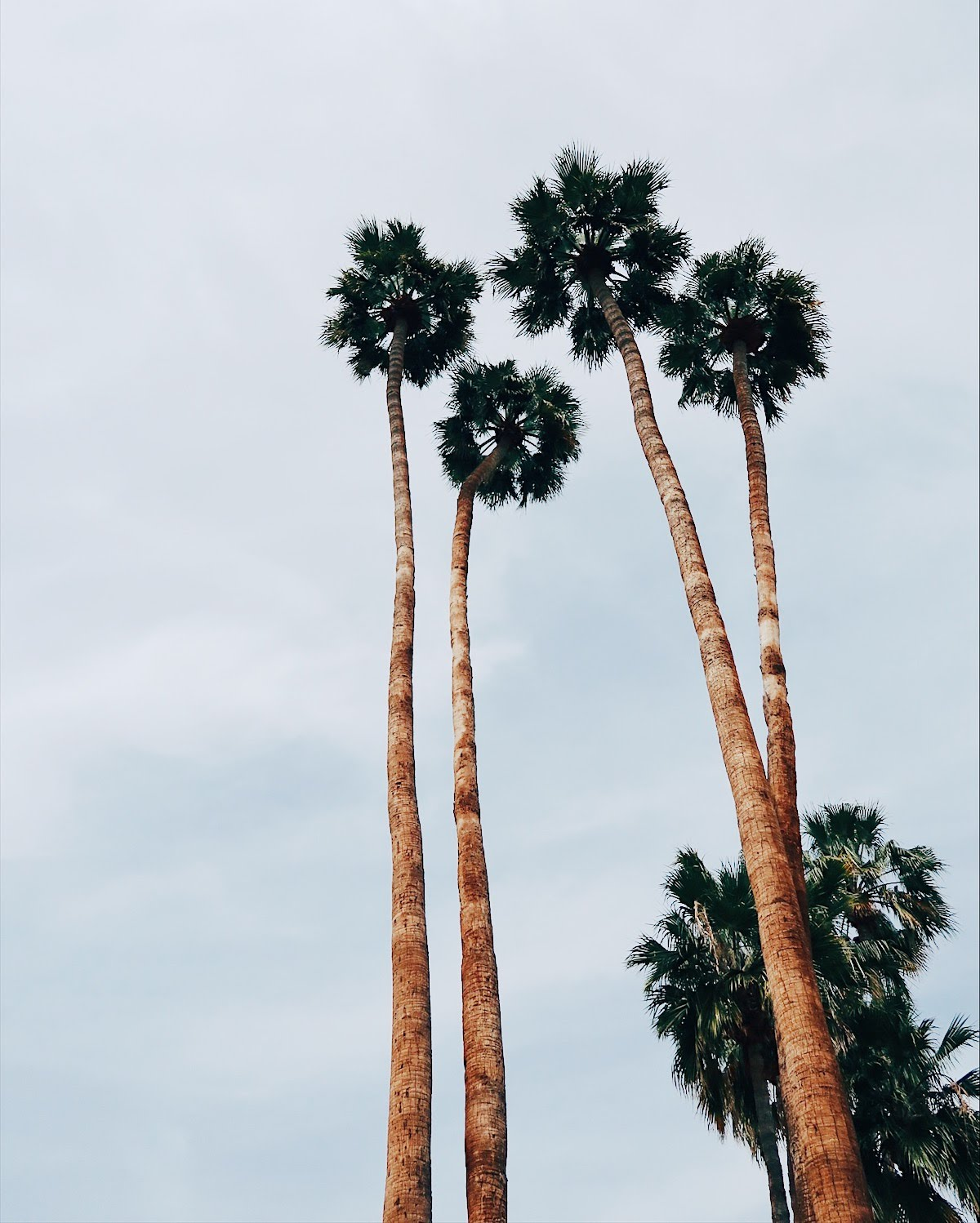 palm springs, california | tinted green
