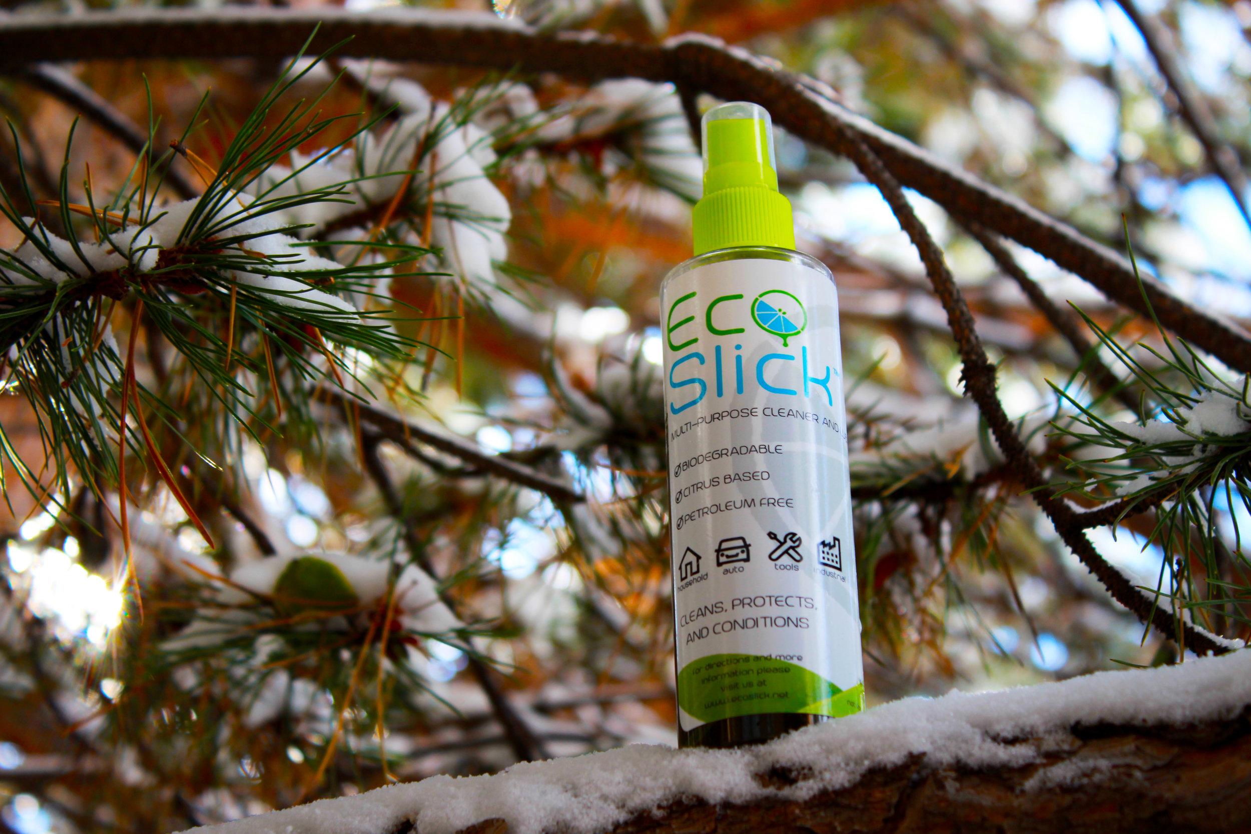 TREE PHOTO 1.jpg