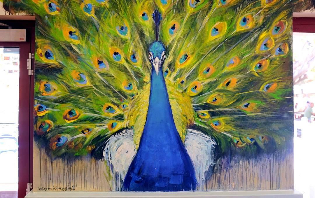 The Lane (Rottnest) - Peacock