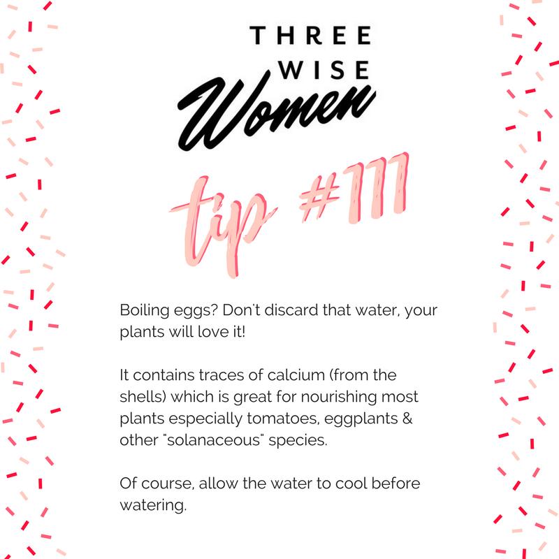 Three Wise Women Egg Garden Tip