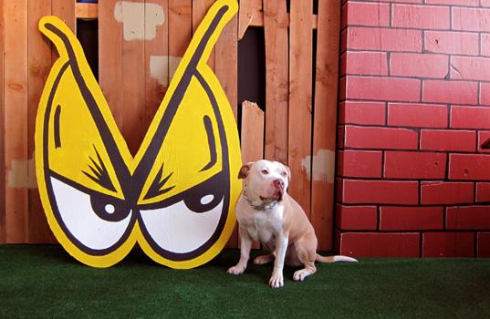 DoggieDogg.jpg