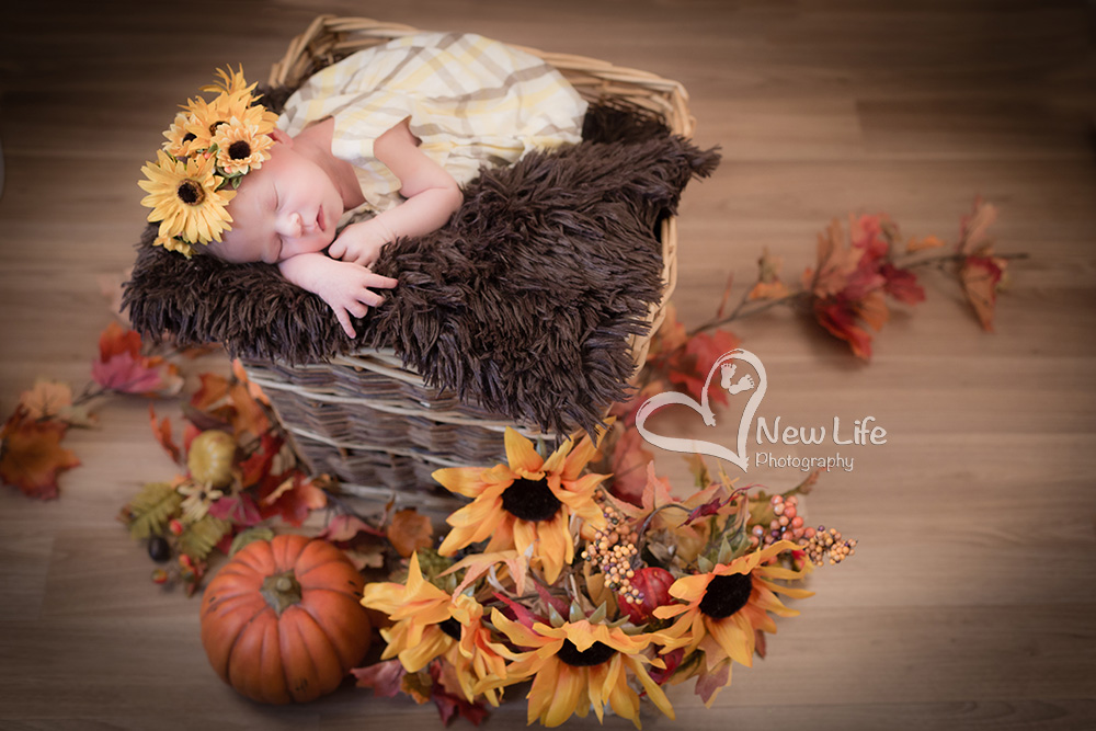 New Life Photography Bienne
