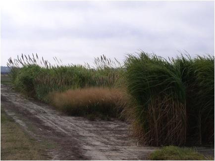 Energy-Grasses.jpg