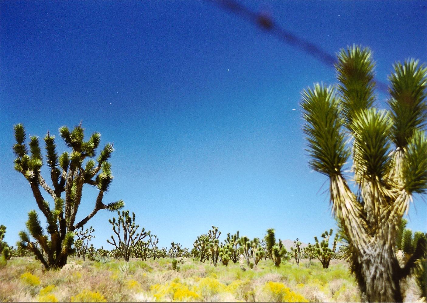 20050804-BdMV Beatriz de Miguel Vijandi - go west-17.jpg