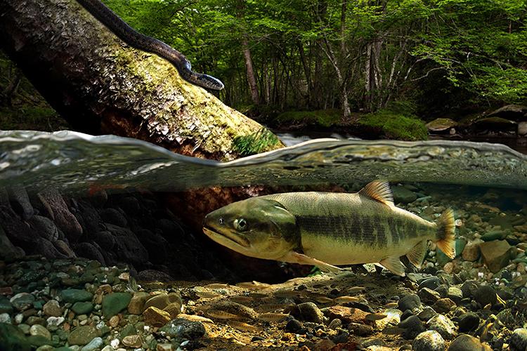 Fish Snake Log.jpg