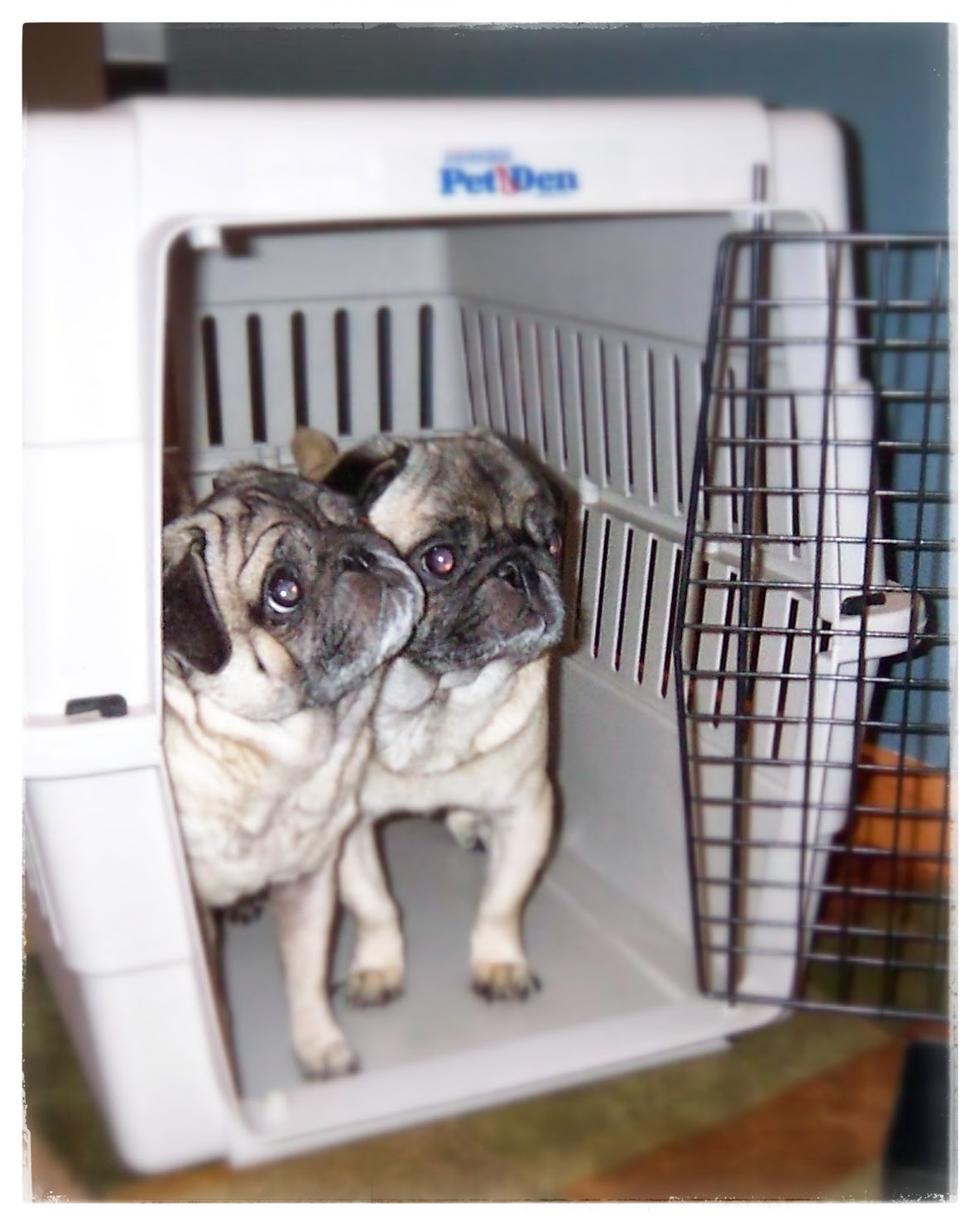 Pablo & Paloma testing a crate.