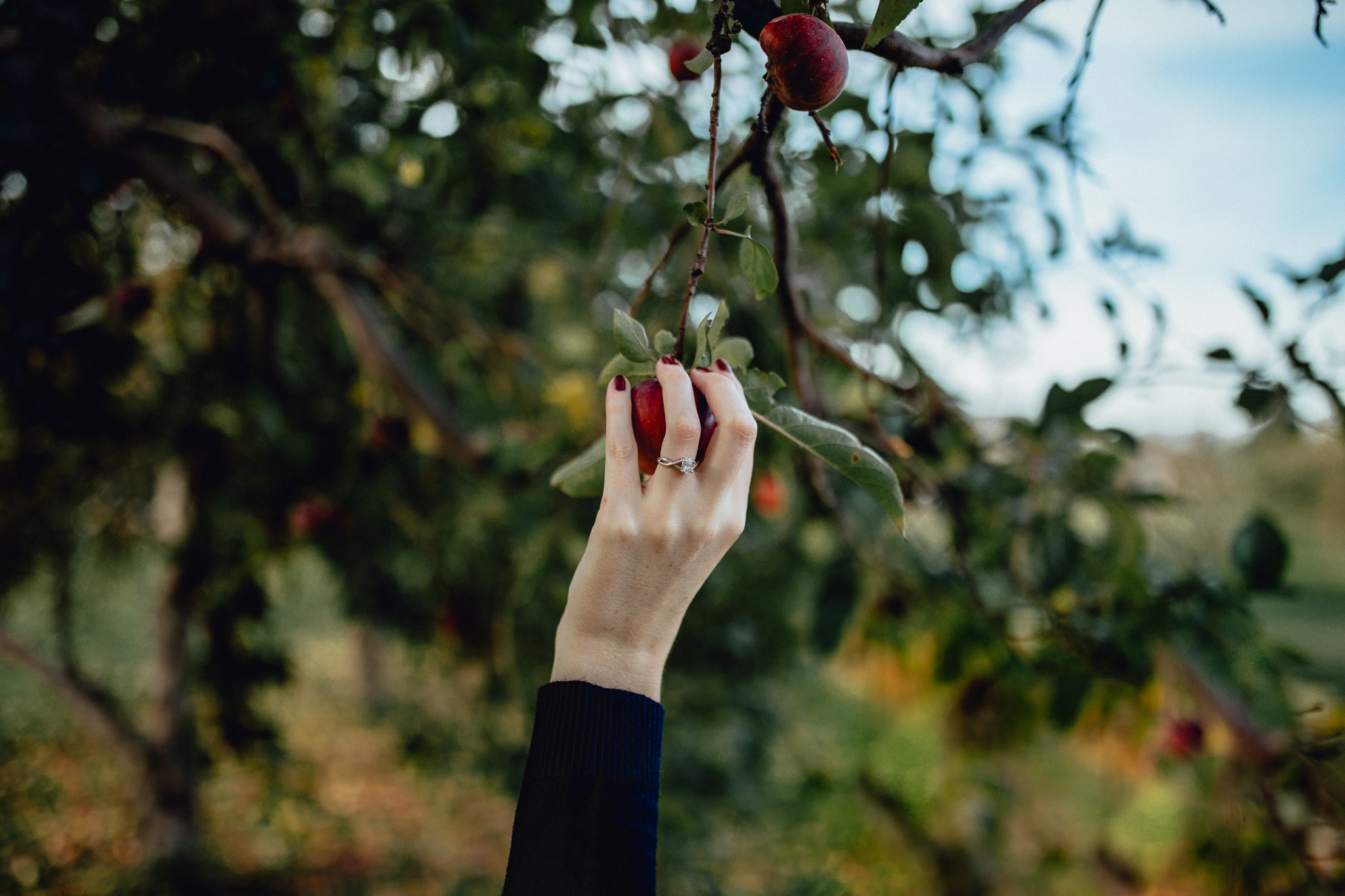 bride-picking-apple-from-tree.jpg